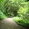Pathway Small