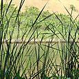 Long grass_lake